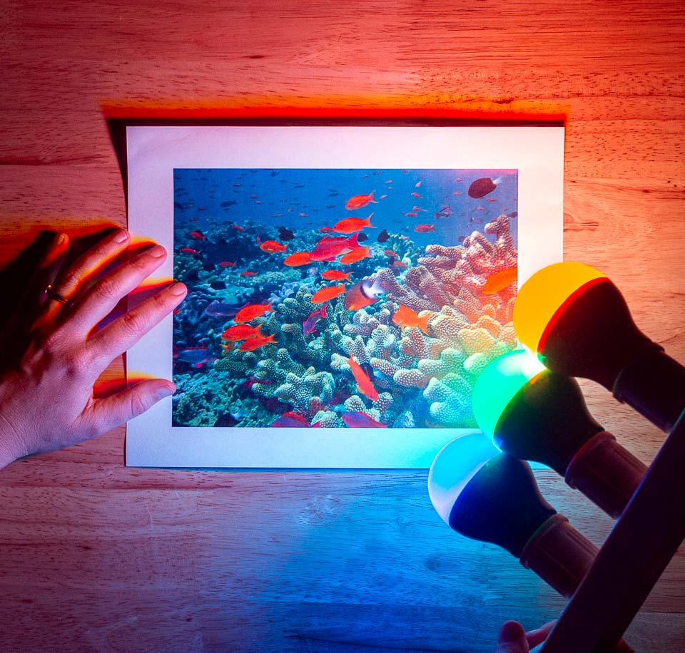 Science activity to explore underwater color perception