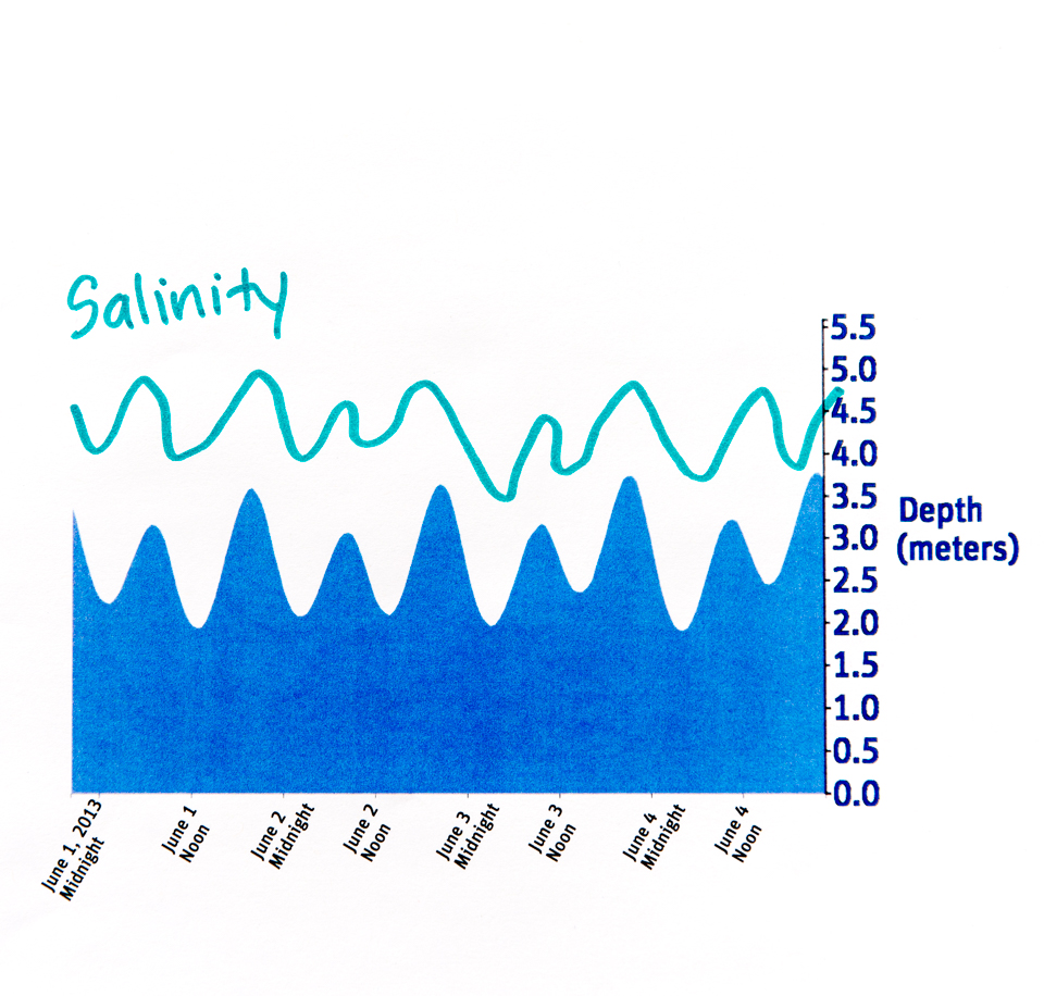 Science activity that explores how water temperature and salinity are tied to the tidal cycle