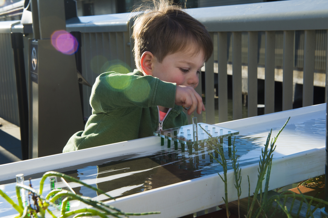 A young boy using the Trapping Sediment exhibit prepares to adjust an array of artificial plant stems.