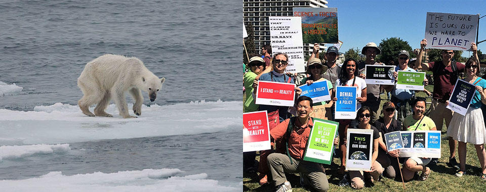 Starving polar bear juxtaposed with climate activists