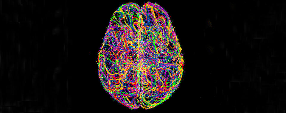 Black background with a diagram of the brain showing the neural networks in different bright colors