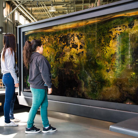Visitors look at the colorful Bacteriopolis exhibit.