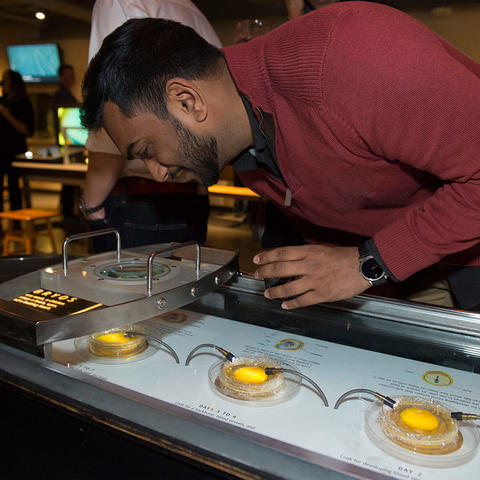 A visitor interacts with the Live Chicken Embryo exhibit.