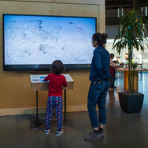 A family playing with the Flock exhibit