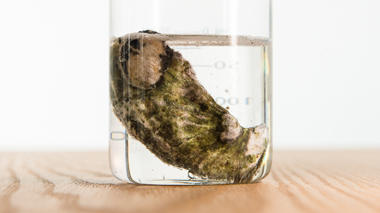 Science activity that demonstrates the effects of ocean acidification