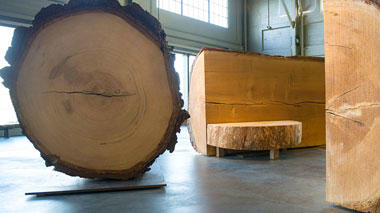 Big Wood: 300 Years of Photosynthesis