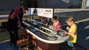 Adults and children interacting with the Sediment Trapping exhibit, a flume flowing with Bay water and sediment.