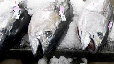 What if we banned fishing in international waters?