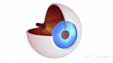 Millions of people around the world struggle to live with corneal blindness——the loss of sight caused by damage to...