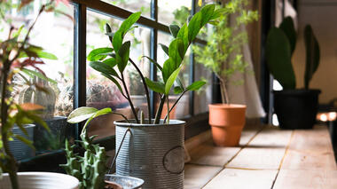 Photograph of houseplants in a variety of pots near a window