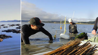 Conversations About Landscape: Rebuilding a Living Shoreline in San Francisco Bay