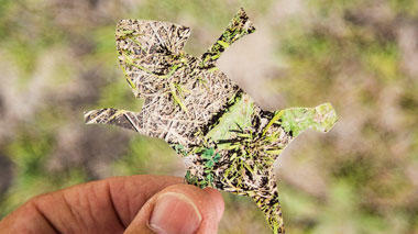 Science activity that demonstrates perception of camouflage and movement