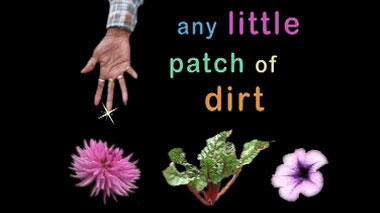 Any Little Patch of Dirt