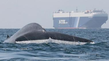Lab and Lunch: Whale Hotspots on the West Coast