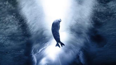 Marine Mammals at the Poles: Sentinels for Climate Change