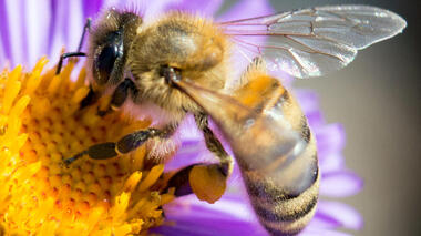 They may be small, but the impact of bees is mighty, and the work of these flying insects plays key roles in sustaining...