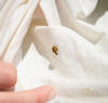 A science activity to discover the diversity of insect life in your neighborhood