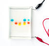 Science activity that demonstrates gel electrophoresis